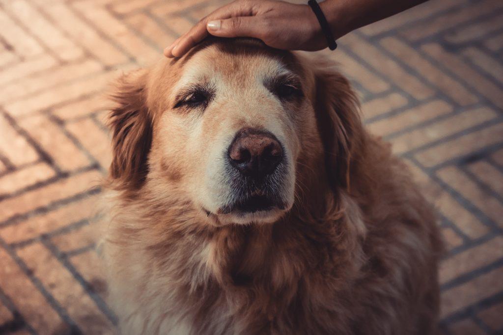 leben mit altem hund