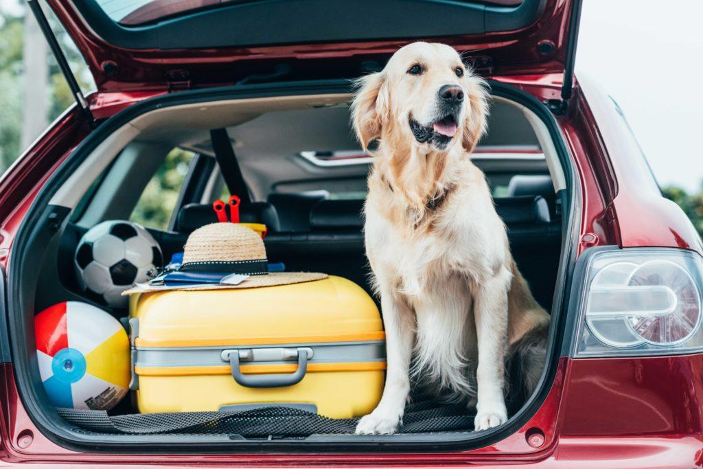 eu reisen mit hund