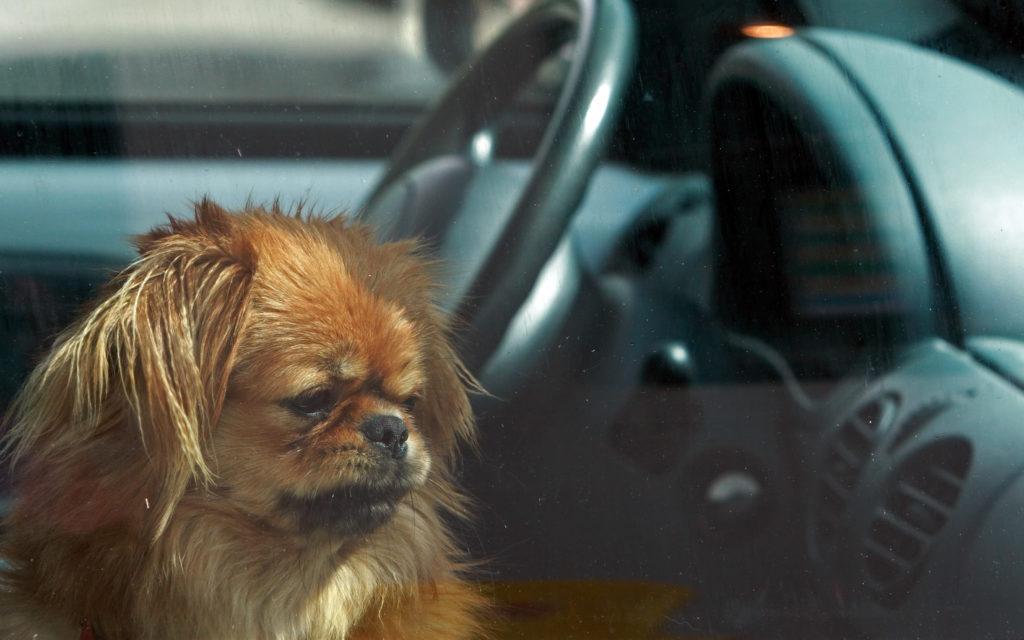 Hunde bei Hitze im Auto lassen