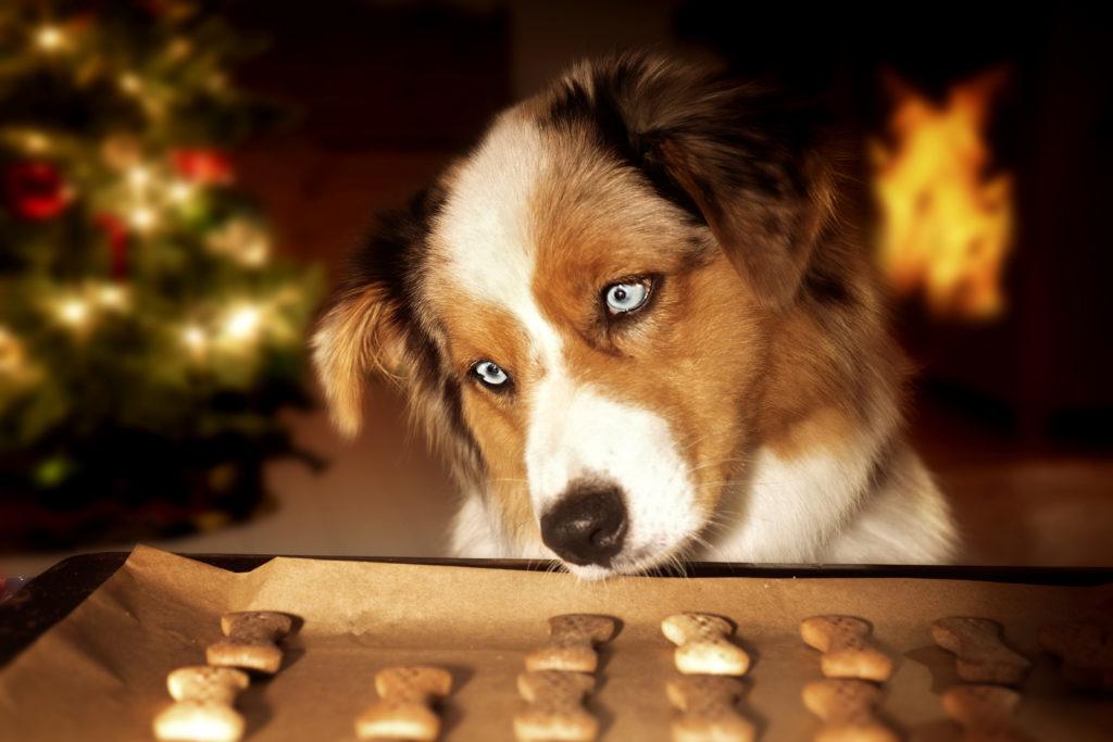 Weihnachtskekse für den Hund