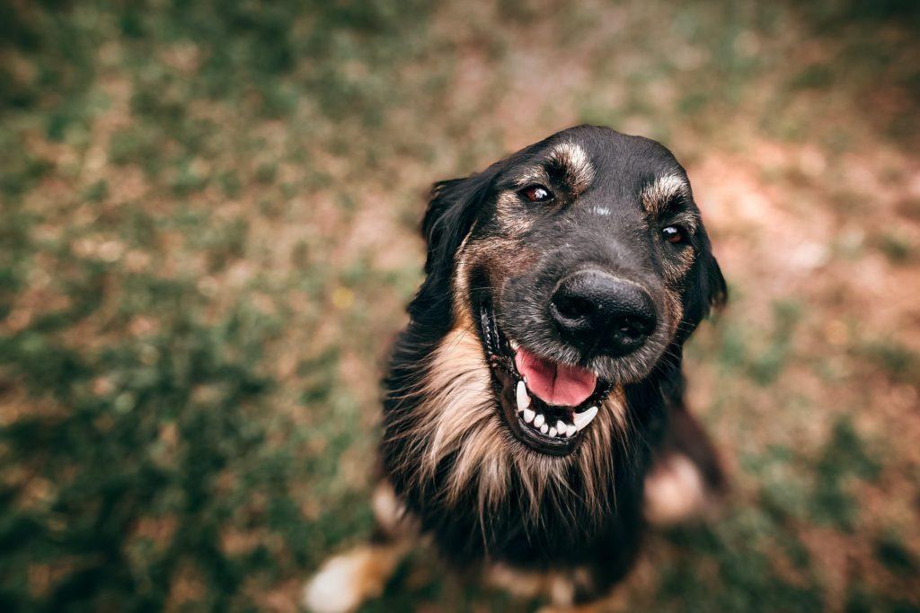 Hund Kastrieren oder nicht?