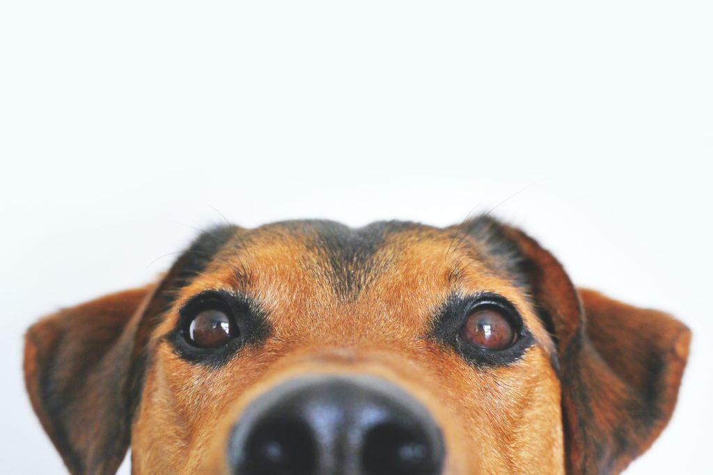 Unterschätzen Sie nicht die Bedeutung von Wurmkuren beim Hund