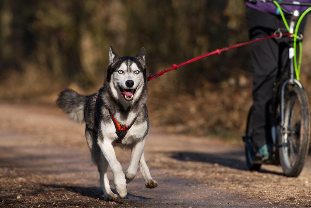 Dogscooting macht Hund und Halter Spaß